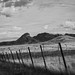 After The Harvest- Hannah's Hill Vineyard- Sonoita, AZ