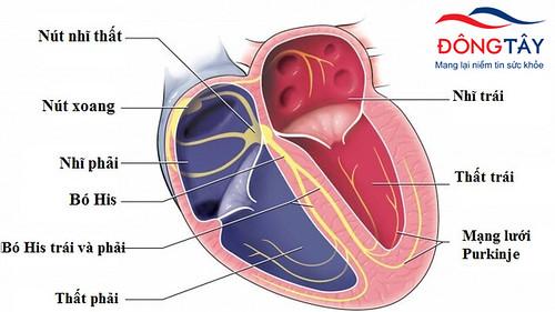 Tổng quan về rối loạn nhịp tim