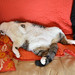 Butchie sleeps by Nesster