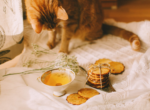 Yellow Cookies for yellow cat