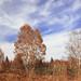 秋景 - Autumnal landscape.