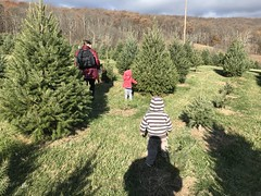 Kate and the twins explore the Christmas tree farm