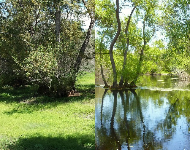 Seasonal Wetlands: Summer vs Spring