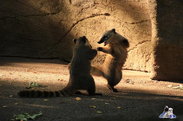 Tierpark Hagenbeck 27.09.2015 0125
