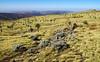 Day 3: Highland meadows at Geech