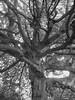 Tree by RoboSchro