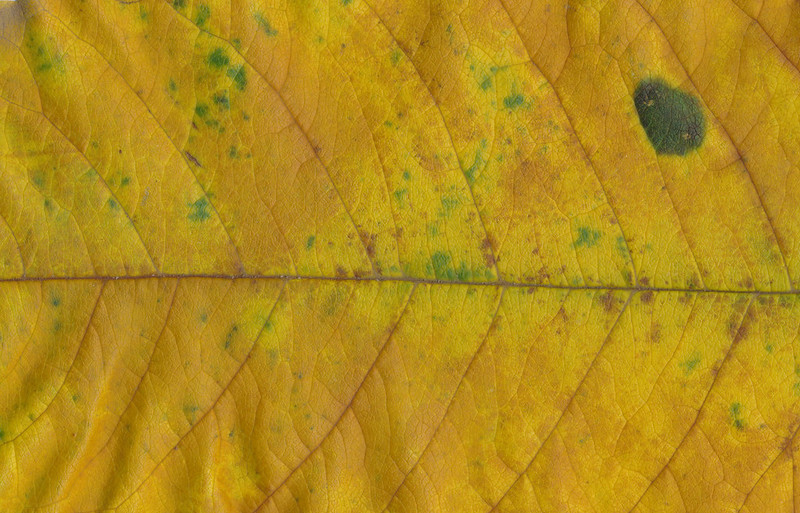CreativeCommons - Autumn leaves - 2015 Series 1 - 12 by #TexturePalace