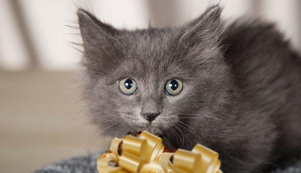 cat-floor-ribbon