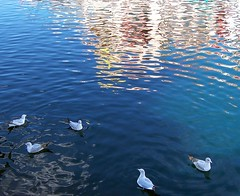 USA (Orlando, FL) Sea gulls and reflections