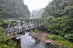 Puente entre vegetación