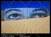 Eyes on the dune