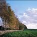 Treeline - Sunny Side by holtelars