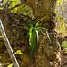 epiphyte aloe - blyde river canyon, south africa 2