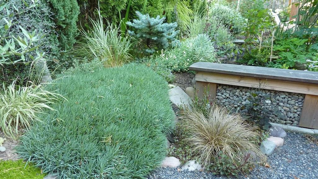 Back Garden - Near the Table
