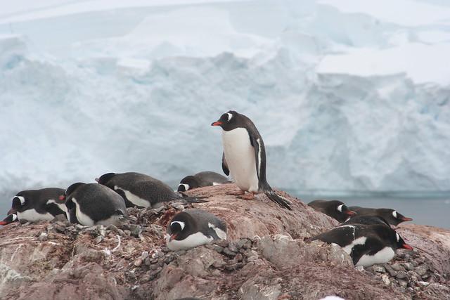 Antarctica 2006 (21)