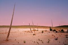 Dune Moonrise