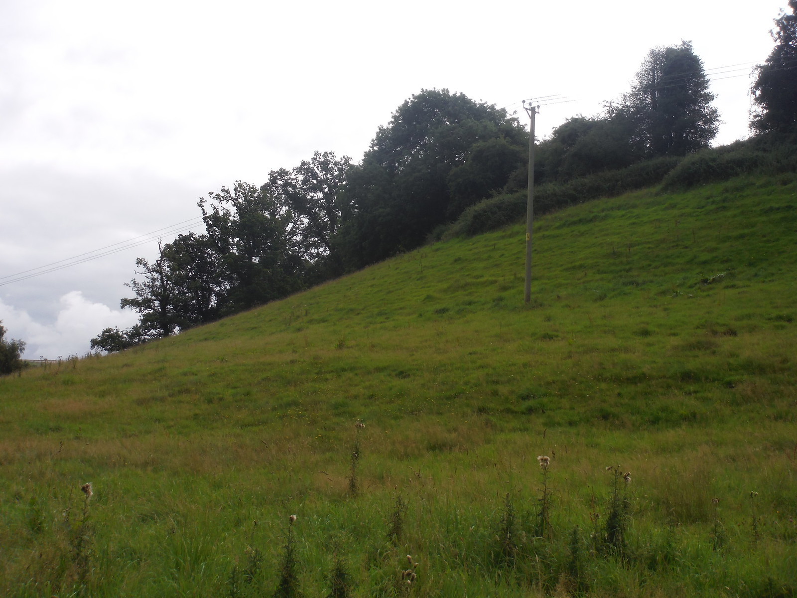'...to the upper far end of the steep slope...' SWC Walk 250 Tisbury Circular via Alvediston