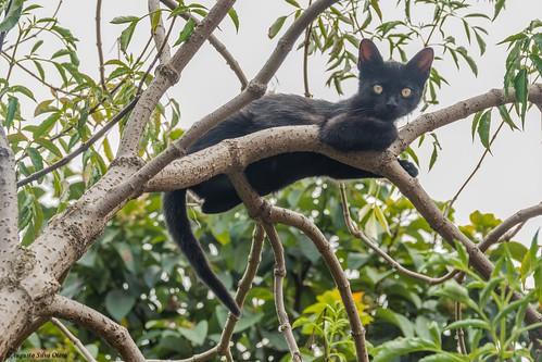 naturaleza cali fauna colombia florida gatos valledelcauca fincas