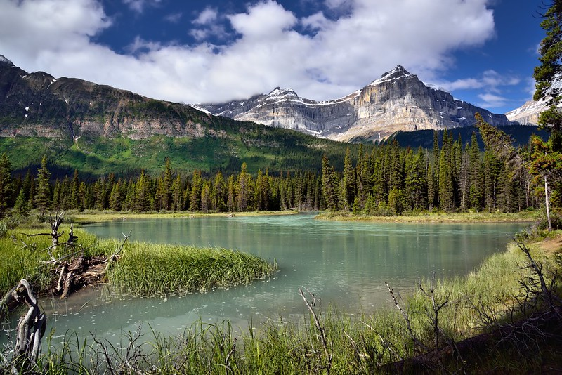 A Meander in the Mistaya River (Banff National Park)