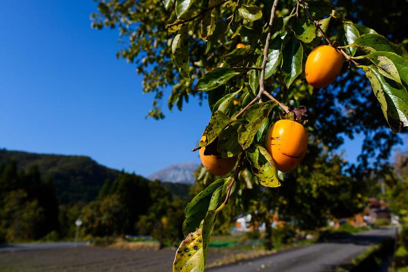 大山 紅葉 柿