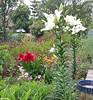 Hey @sergeiw - spent a few days with @rhondabutcher  Garden looking 'untidy' (your word) as always :)