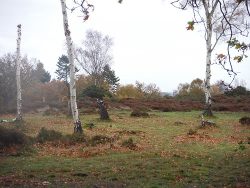 Cooper's Hill Nature Reserve (I)