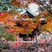2015 Autumn leaves by shinichiro*_back
