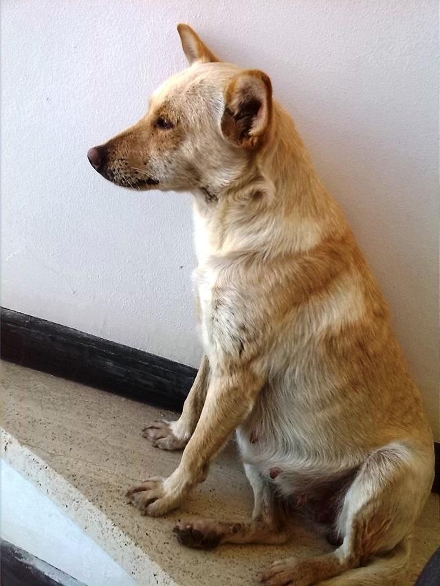 Noicattaro. Il cane Zecca intero