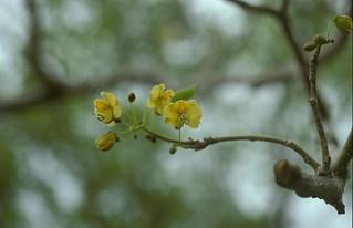 Plantes de madagascar partie I