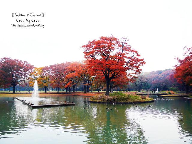 日本東京景點澀谷區代代木公園賞楓葉 (20)