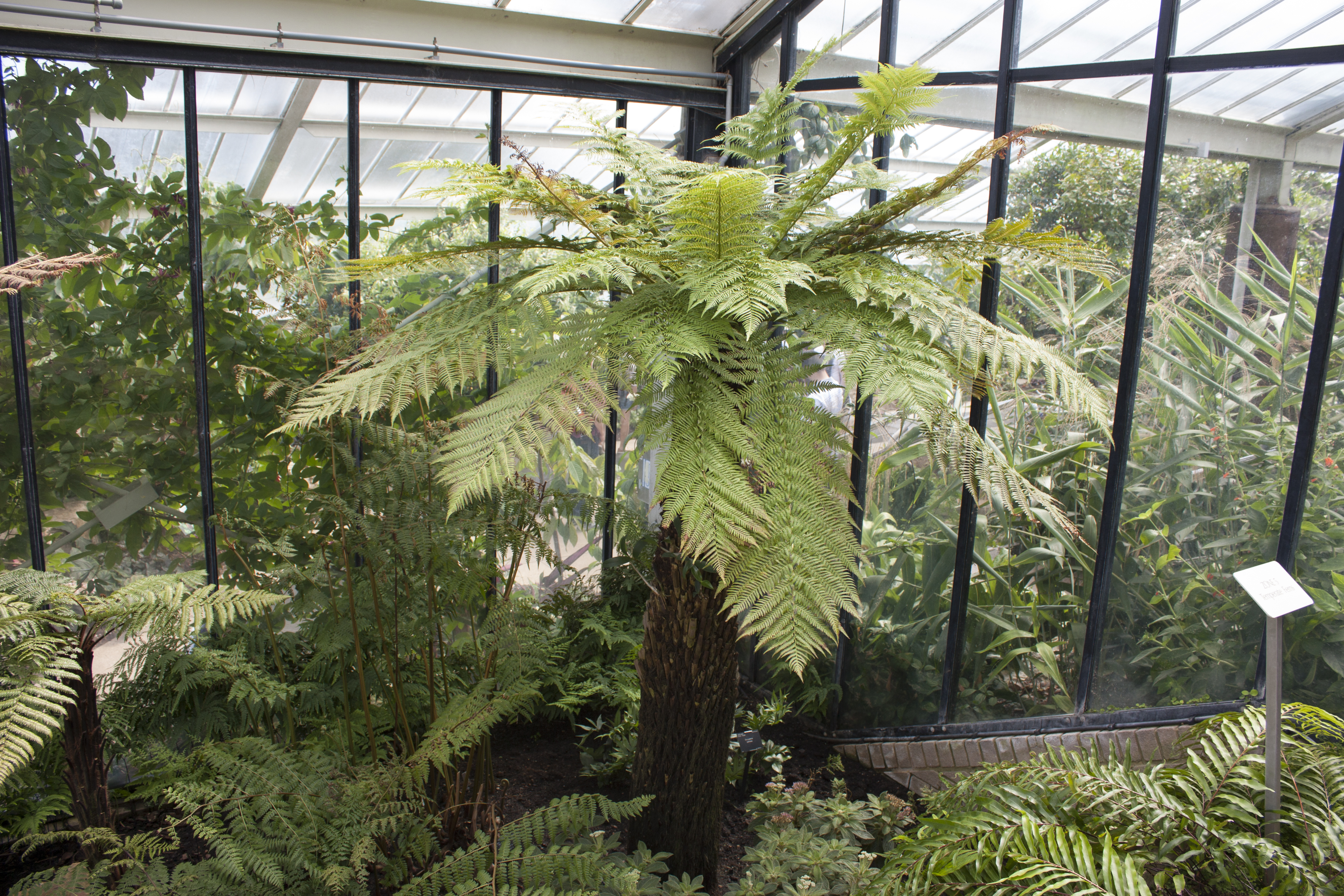 Princess of wales conservatory flickr photo sharing for 32 princess of wales terrace