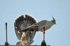 0009 Doves.jpg by Tom Bruen1