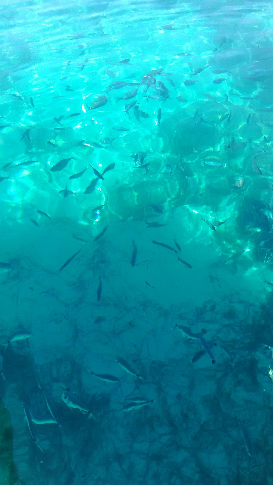 Pesci a Cala Rotonda
