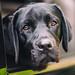 Good Puppy by Thomas Hawk