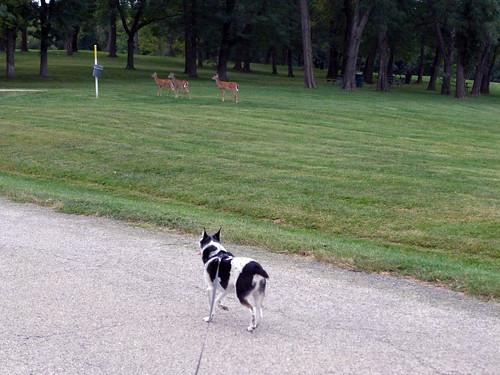 2015-09-23 - Walking at Smithville Lake - 0021 [flickr]