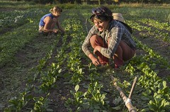 produce(0.0), food(0.0), jungle(0.0), agriculture(1.0), farm(1.0), field(1.0), soil(1.0), harvest(1.0), farmworker(1.0), crop(1.0), rural area(1.0), plantation(1.0),