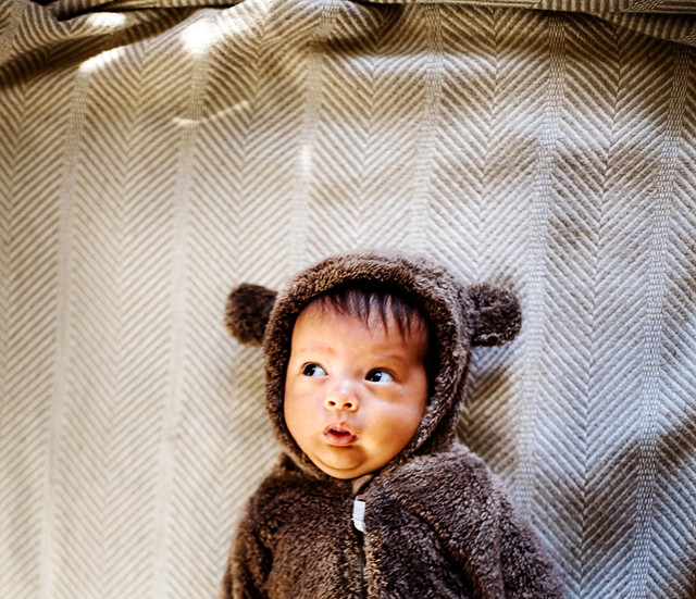 Noah Bear--2a