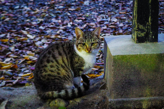 Today's Cat@2015-12-10