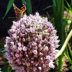 Y de mariposas