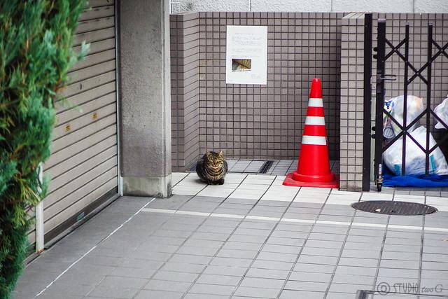 Today's Cat@2015-12-14
