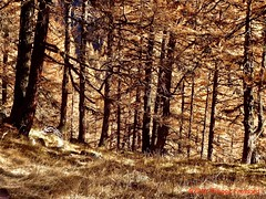 P1010427_LaGouille_Forêtautomnale