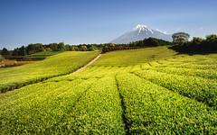 Fuji & Tea Plant