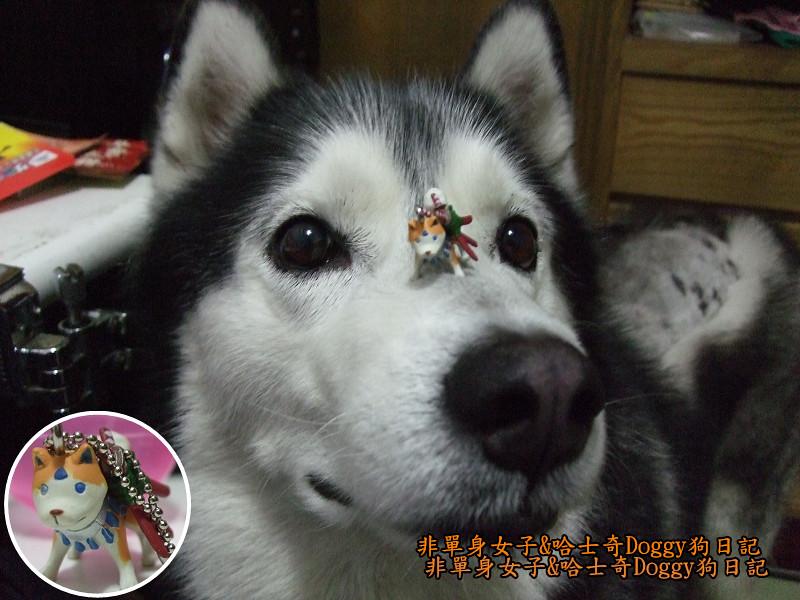 2012哈士奇doggy寵物玩具05