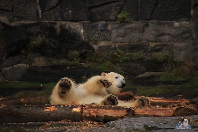 Tierpark Berlin 20.09.2015  0220