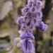 Vick Vaporub Flowers