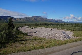 009 Eland in Denali NP en Mount McKinley