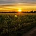 Field in the sunset by PeterSundberg66 former PeterSundberg65
