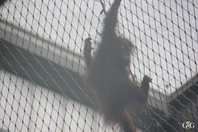Besuch Zoo Rostock 17.10.201556