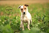 Bolt - HULA Animal Rescue | Bedfordshire Dog Photography