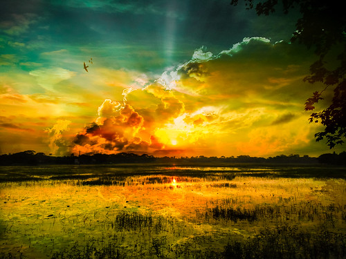 sunset sky cloud sun house color tree bird water grass animal illustration landscape photography design leaf place fineart sunrays wildflower bd bangladesh dhakadivision sreenagarupazila samashpur